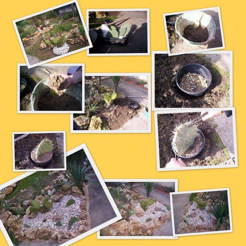 plantation cactus