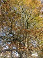 automne 443
