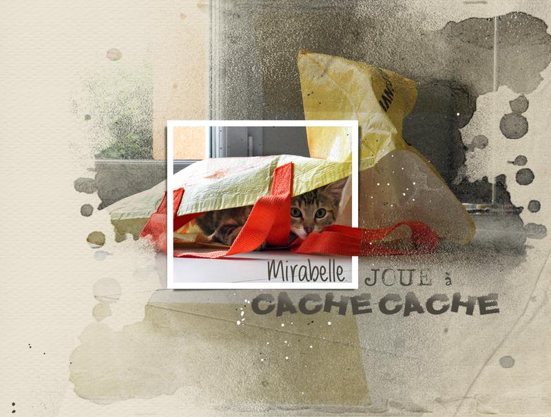Mirabelle-au-ras-du-sol