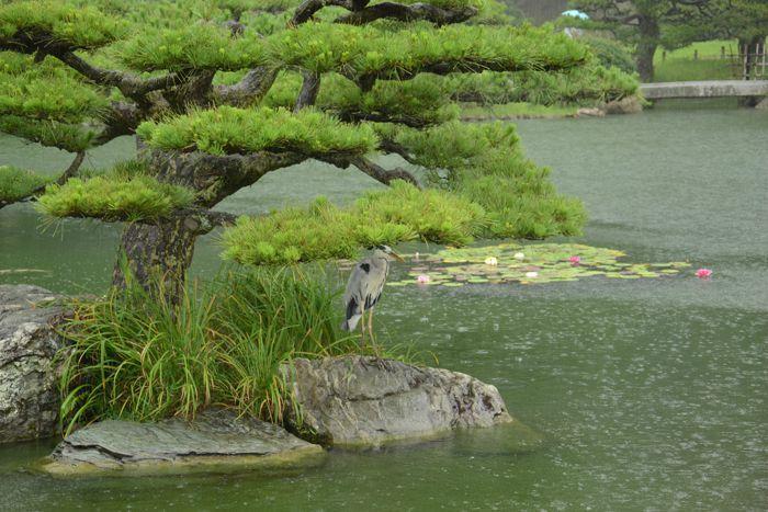 3 juillet Takamatsu Ritsurin 304