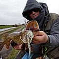 25 février dutch pike - brochet hollandais