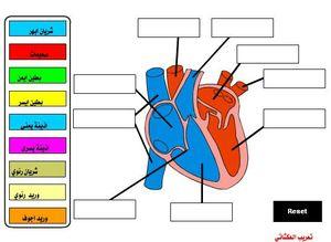 heart_0_0