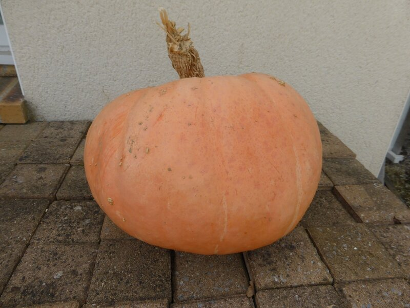 6-courge (2)