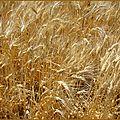 agricole_defi52