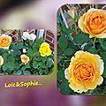 balanicole_2016_02_fevrier_rosiers1_76_loic_sophie2