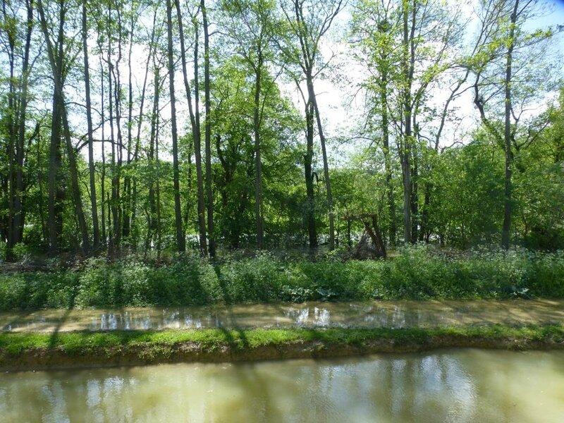 2015 05 Bourgogne (1300)