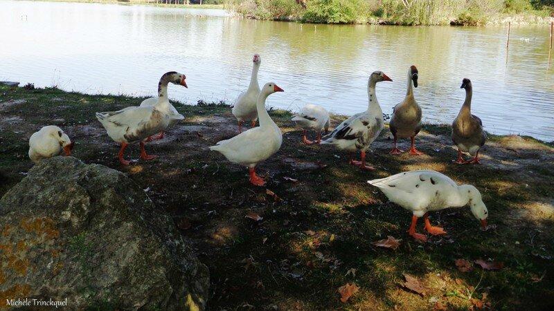 Lac de Tastoa 300916