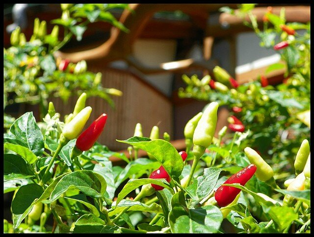 Oviri Lodge's chilis