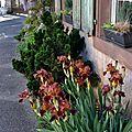 Iris de façade