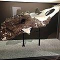 Musée des dinosaures, Drumheller (10)