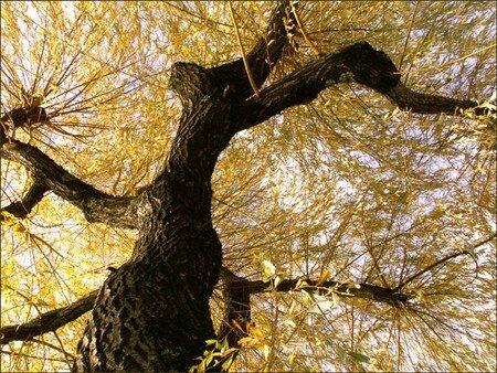 sous_mon_arbre_or