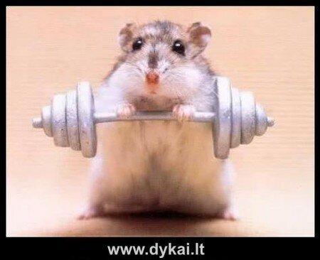 hamsterlifter