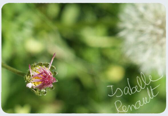 mon_jardin_6