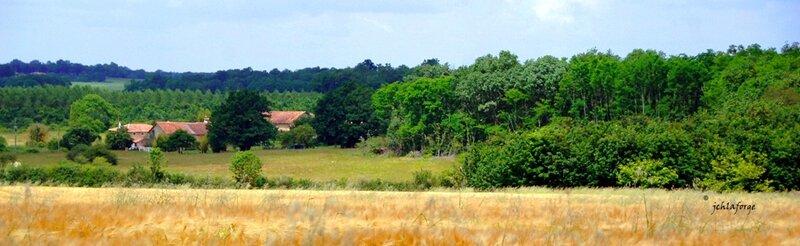 Village et blé Etampes proche (2)