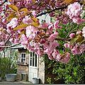 Windows-Live-Writer/Joli-printemps-au-jardin-_601C/20170402_102346_thumb