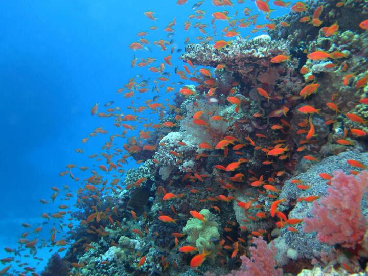 La mer et ses petits poissons