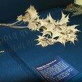 Mer = Chardon bleu - Panicaut de mer