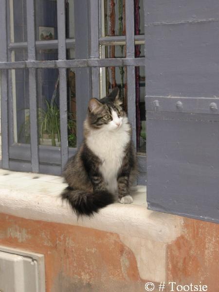 le chat de Tarascon