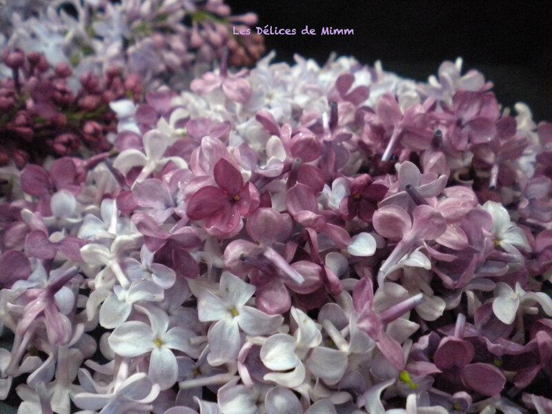 Sucre de lilas 5