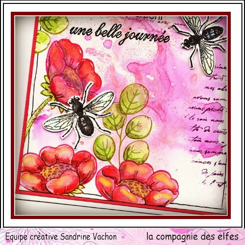 Carte insecte UNE BELLE JOURNEE DT LCDE (3)