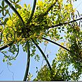 Windows-Live-Writer/Jardin_10232/DSCN0786_thumb