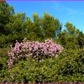 Luminy-Sormiou 28 octobre 09 .