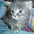 chatons_10