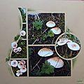 A la cueillette des champignons
