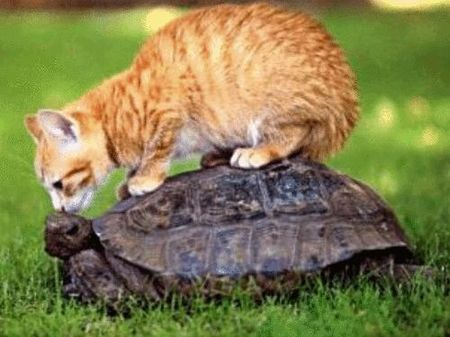 tortue_et_chat