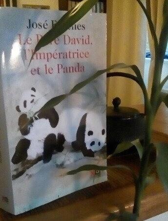 panda frèches
