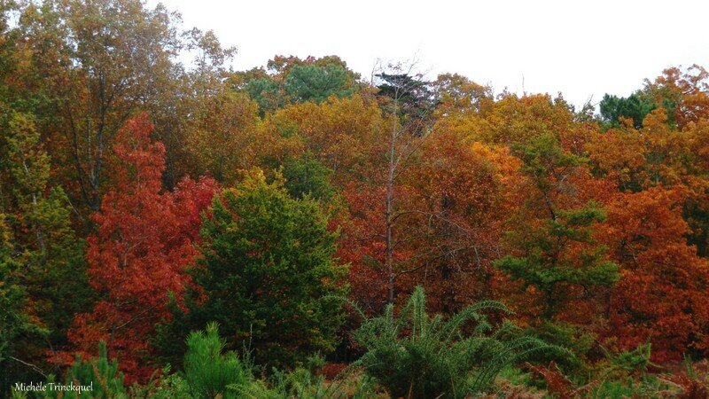Linxe automne 24101514