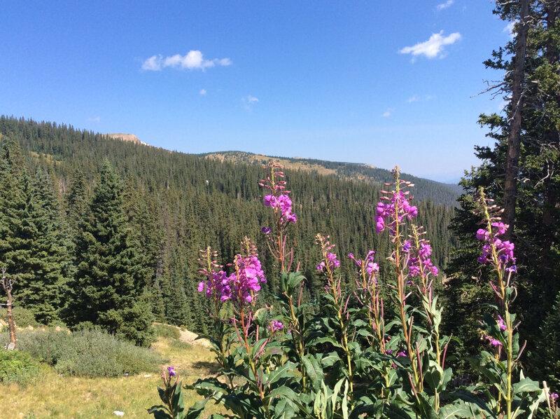 fleurs montagnes Colorado_etsionjasait