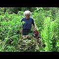 Film : le jardin abondant par l'electroculture