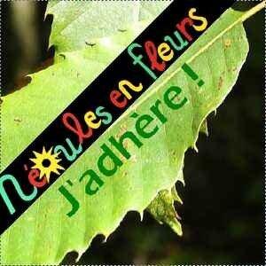 NEF_jadhere_2019