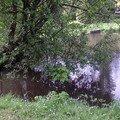 Vue de l'étang 1