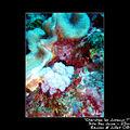 Nudibranche 10