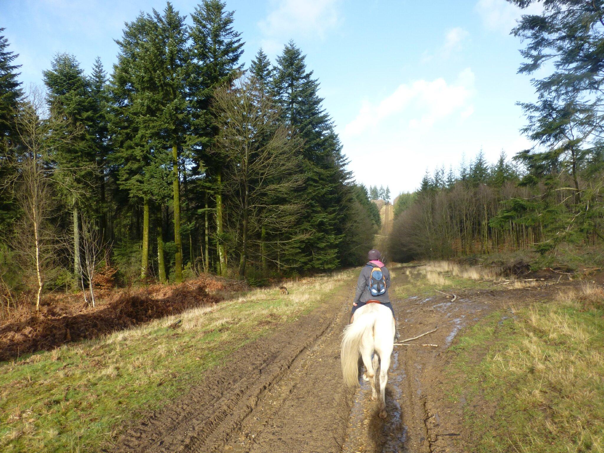 Balade à cheval dans la forêt P1080197