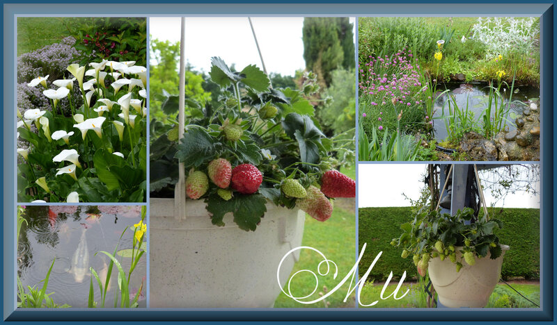 jardin 14 05 18