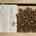 Immersion 2011 30 cm x 45 cm aspirations 2011 30
