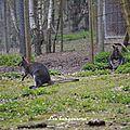 Promenade dans une réserve animalière