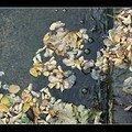 Automne: feuilles et eau