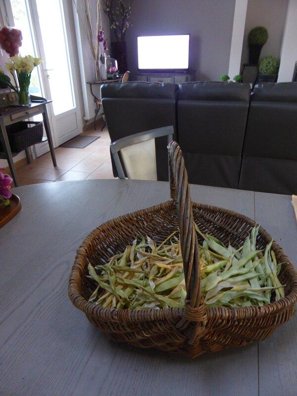 11-haricots à écosser (2)