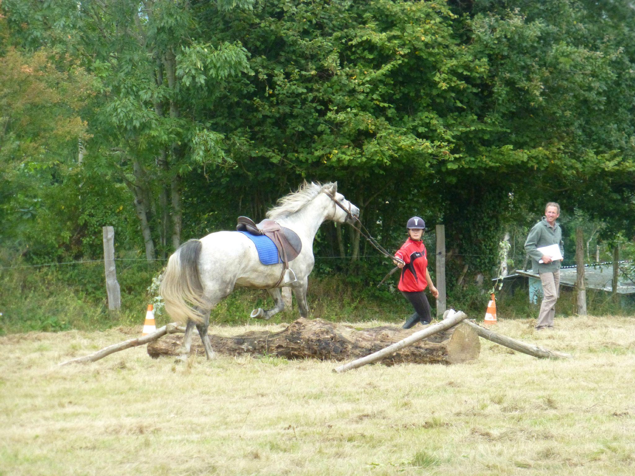Jeux équestres manchots - parcours de pleine nature après-midi (197)