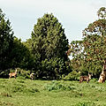 Discover Bale park Ethiopia before you die
