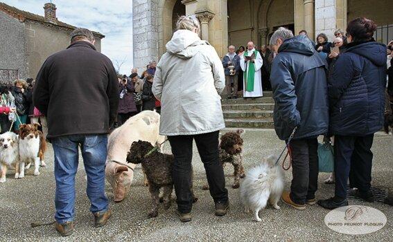 benediction_des_chiens_et_du_cochon