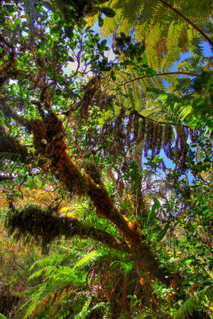 vegetation_primaire_hdr_blog