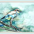 Oiseau le guêpier Aquarelle Ghislaine Letourneur d'après photo Cyril Doret