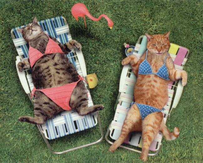 Cat Swimsuit Issue