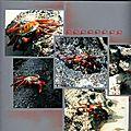 crabe int coté gauche