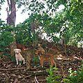 chienne avec ses chiots sur plage